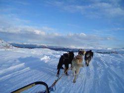 Hundeschlittentour im Yukon